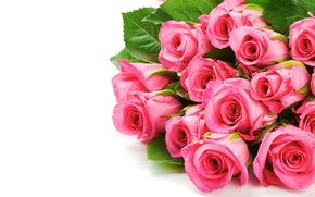 Picture flowers, pink, roses, bouquet