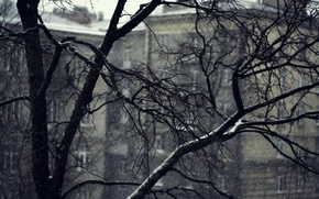 Picture snow, branches, mediocrity, home, Tree
