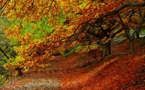 Wallpaper Park, road, leaves, fall, leaves, path, colors, trees, walk, autumn, forest, park, forest, nature, trees, ...
