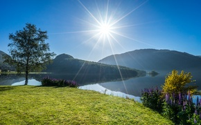 Picture flowers, lake, tree, Norway, Norway, lupins, Rogaland, Vigesaa