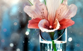 Picture flower, water, glass