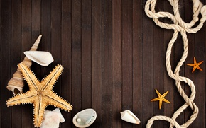 Picture rope, shell, pearl, starfish