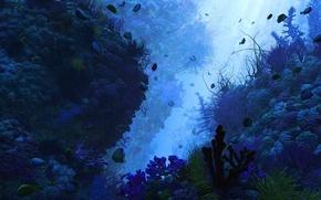 Picture fish, algae, the bottom, depth, corals
