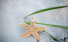 Picture sand, ring, starfish