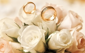 Picture roses, white, buds, engagement rings