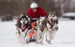 Wallpaper running, dogs, race