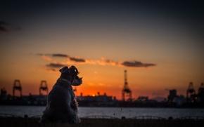 Wallpaper Terrier, Dog, horizon, sunset