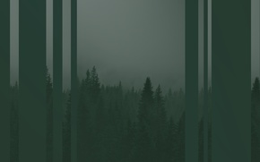 Picture forest, trees, green, strip