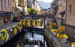 Picture river, home, swans, France, Annecy