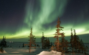 Picture winter, trees, night, Aurora, Northern lights
