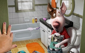 Picture dog, bathroom, mistress, magazines