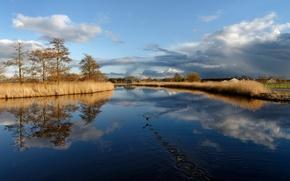 Wallpaper lake, landscape, bird