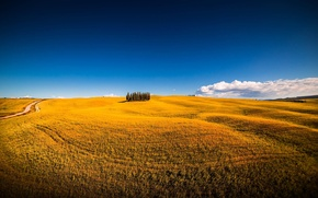 Picture field, summer, the sky, trees, nature, italy, montalcino, siena, san quirico d'orcia