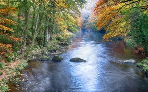 Picture autumn, forest, trees, river, stone