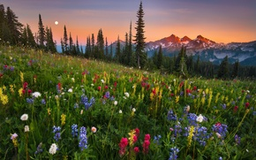Picture moonrise, field, flowers, mountain