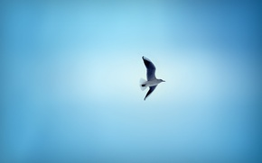 Picture BACKGROUND, The SKY, WINGS, FLIGHT, BIRD, BLUE