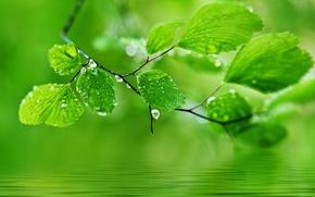 Wallpaper leaves, drops, macro, nature