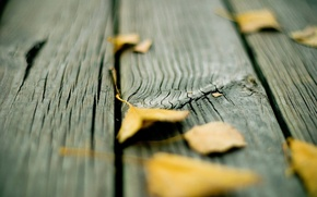 Picture autumn, leaves, Board