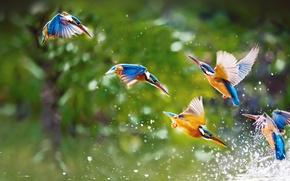 Picture water, flight, squirt, birds, wings, pack