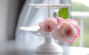 Picture tenderness, roses, vase, bokeh