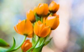 Picture flowers, petals, orange