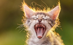 Picture blur, mouth, yawns, Kitty