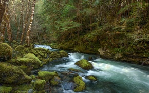 Picture forest, river, stones, moss, stream