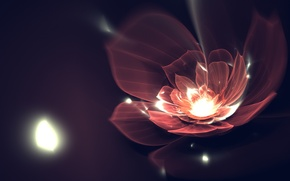 Picture flower, line, petals, art, fractal, Fractal
