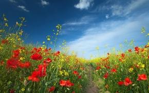Picture field, summer, landscape, flowers
