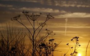 Wallpaper dill, the sky, light, flowers