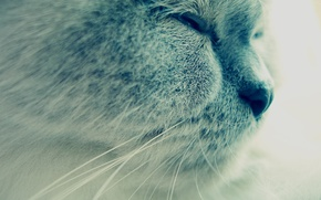 Picture animals, cats, grey