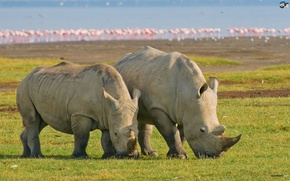 Picture Indian, Rhino, Great