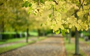 Picture road, autumn, leaves, macro, Park, tree, branch, blur