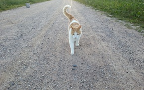 Picture road, grass, nature, animal, Cat, gravel, kitty, pet