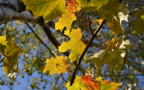 Picture autumn, leaves, blue background