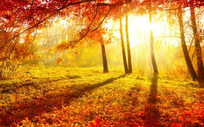 Wallpaper autumn, forest, grass, leaves, the sun, light, trees, nature, Burgundy