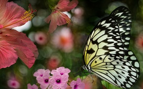 Picture summer, flowers, butterfly