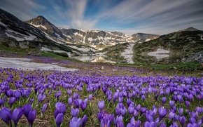 Wallpaper flowers, the sky, lake, mountains, nature