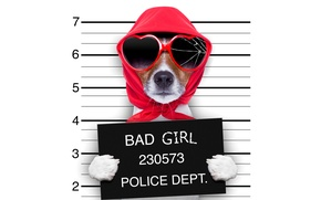 Picture red, glasses, glass, Jack Russell Terrier, shawl, face, plate, white background, broken, cracked, humor, paws, ...
