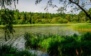 Picture greens, forest, summer, grass, trees, river, the reeds, Germany, Sunny, Oranienburg