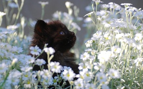 Wallpaper kitty, black, chamomile, small, lawn