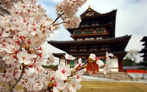 Picture flowers, nature, house, branch, Japan, petals, Sakura, pagoda
