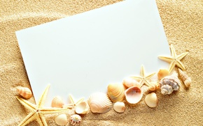 Picture sand, shell, texture, sand, paper, seashells, starfishes