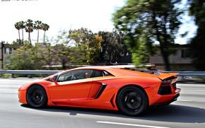 Picture Lamborghini, Orange, Aventador, sport car