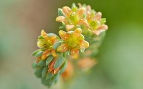 Picture flowers, background, branch, blur, yellow-orange