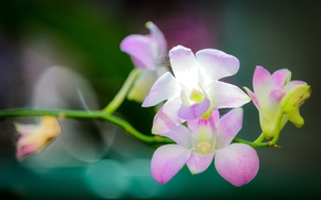 Picture light, orchids, Orchid