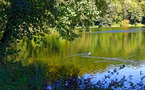 Picture greens, forest, summer, grass, trees, branches, lake, foliage, Germany, duck, floats, Gillenfeld