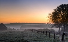 Picture field, trees, landscape, fog, morning