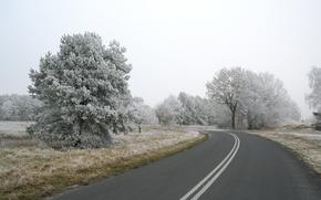Wallpaper road, trees, snow