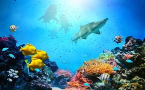 Picture marine, coral, life reef